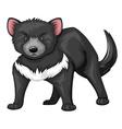 Tasmanian devil with black fur vector image vector image