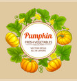 pumpkin frame vector image