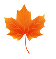autumn leaf isolated on white background vector image