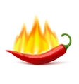 Flaming Hot Chili Pepper Pod Image vector image