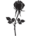 rose black vector image vector image
