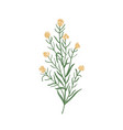 wallflower isolated on white background realistic vector image vector image