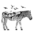 Hand drawn zebra for your design wildlife concept vector image