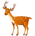 cute deer standing on white background vector image vector image
