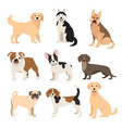 flat style dogs collection cartoon dogs breeds vector image