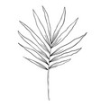 a branch palm on white background design vector image