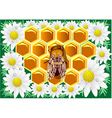 beeswax vector image
