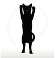 cat silhouette in Boxing pose vector image