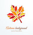 Colorful cutout autumn leaf vector image vector image