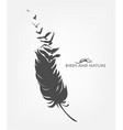 feather with flying flock of birds vector image