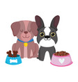 pet shop dogs different breed house and food vector image