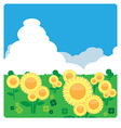 Sunflower meadow in sunny day vector image vector image