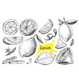 hand drawn lime or lemon set vector image