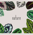 slogan nature leaves frame vector image vector image