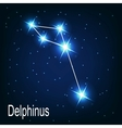 The constellation Delphinus star in the night sky vector image vector image