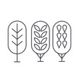 birch tree thin line icon concept birch tree vector image