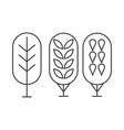 birch tree thin line icon concept birch tree vector image vector image