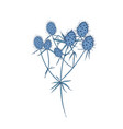 field eryngo flowers stems and leaves isolated on vector image
