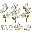 flowering white magnolia branches vector image vector image