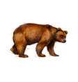 portrait of a brown bear from a splash vector image vector image