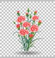 red carnation schabaud flower green stem leaves vector image