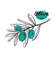 Stock of olive branch vector image vector image