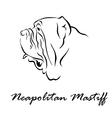 Neapolitan Mastiff vector image vector image