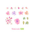 set watercolor floral elements for decoration vector image vector image
