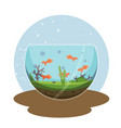 transparent aquarium with golden fish vector image vector image