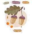 autumn acorn october vector image vector image