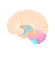 Convolutions of the brain vector image