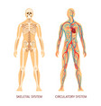 human body system human body skeleton and system vector image