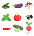of vegetables vector image