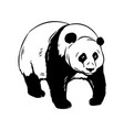 panda bear icon vector image