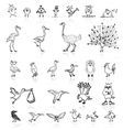 Sketch of funny birds for your design vector image