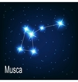 The constellation Musca star in the night sky vector image vector image