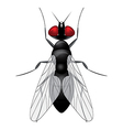 Fly insect sketch symbol vector image vector image