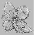 grey flower 8 vector image vector image