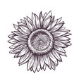 sunflower with seeds sketch hand drawn flower vector image