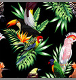 tropical birds and palm leaves seamless black vector image vector image