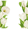 beautiful white tulips realistic background vector image vector image