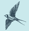 swallow in flight detailed hand drawing vector image