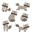 set of cute raccoons set of cute raccoons vector image vector image