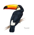toucan hand drawn vector image vector image