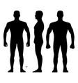 fashion man body full length bald template vector image vector image