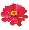 flower 6 vector image vector image