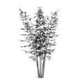 young bamboo bushes vector image vector image