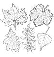 Set of autumn leaves - maple aspen oak and rowan vector image