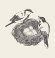bird in nest with chicks hand drawn sketch vector image vector image