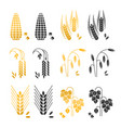 black and gold cereal grains icons rice vector image